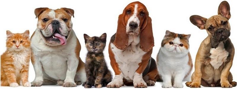 Loja online de Acessórios para cães | gatos | animais