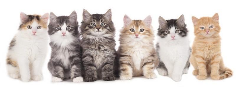 Alimentação para gatos | Arranhadores | Brinquedos  Camas e Colchões | Coleiras  | Peitorais e Trelas para o seu gato.
