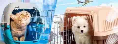 Acessórios para transporte de animais loja online em Portugal