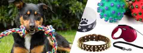 Acessórios para cães - Loja de cães online